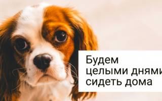 Собаки без запаха для требовательных хозяев