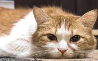 Кошка не ест и постоянно спит, вялая