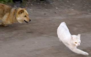 Почему собаки всегда гоняются за кошками