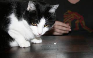 Как дать котенку таблетку