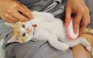 Почему котенок линяет