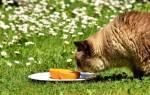 Чем отпугнуть кошек от растений