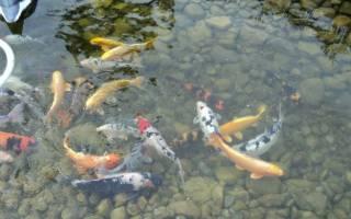 Искусственное разведение рыб: что для этого понадобится