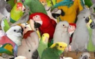 Виды декоративных птиц и советы по их содержанию