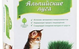 Как вырастить траву для кошек