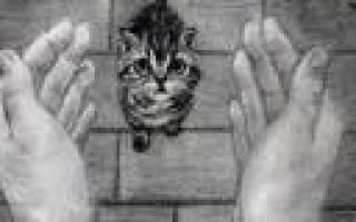 Плюсы корма Флатазор для кошек