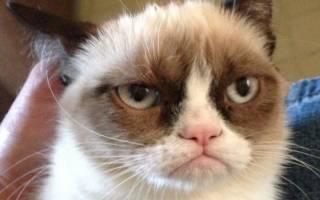 Описание породы кошек с грустными глазами