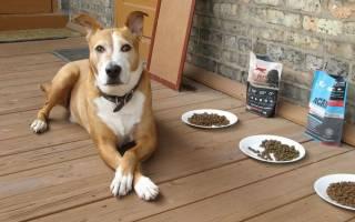 Почему щенок плохо ест