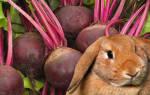 Сахарная свекла для кроликов