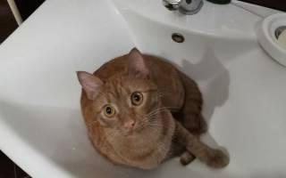 Как помыть кота, если он боится воды панически