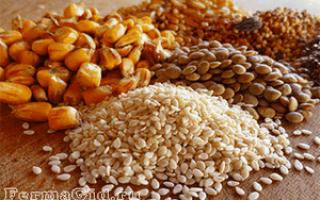 Нормы кормления кур: кормление кур кукурузой