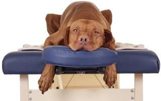Обезболивающие средства для собак