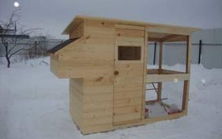 Куры на даче: разведение кур на даче зимой