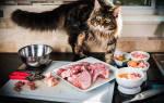 Перфект фит – профессиональный сухой корм для кошек