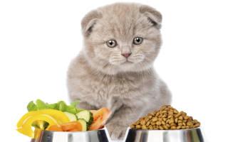Совет, как выбрать хороший и недорогой корм для кошек