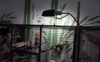 Как правильно выбирать лампы для птиц