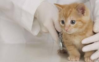 Когда делается первая прививка котенку