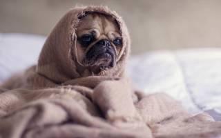 Гельминты у собак: симптомы