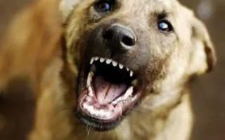 Как избежать нападения собаки