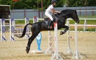 Лучшие породы спортивных лошадей
