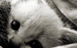 Болеют ли кошки гриппом