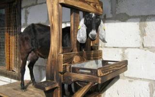 Как выглядит станок для доения коз