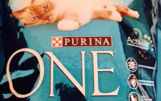 Purina One корм для кошек – отличный вариант