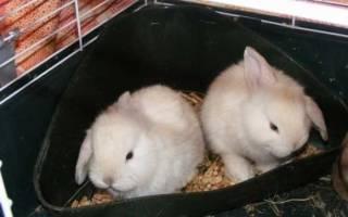 Как приучить кролика к лотку