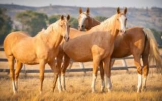 Работа в коневодстве: коневодство как бизнес