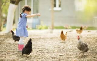 Существуют ли серые куры: породы кур