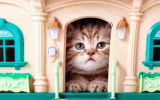 Как приучить котенка к месту в доме