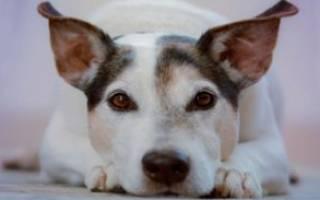 Содержание собак дома: плюсы и минусы больших пород