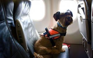 Провоз собак в самолете