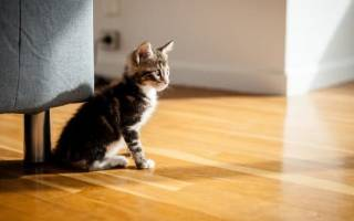 Из-за чего от кошки пахнет тухлятиной
