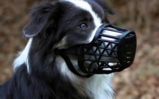 Как выбрать пластиковый намордник для собак