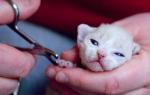 Когда можно котенку обрезать когти