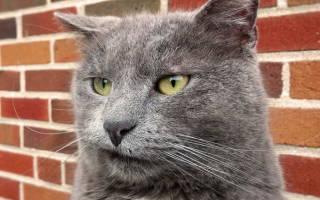 Как происходит лечение пародонтоза у кошек