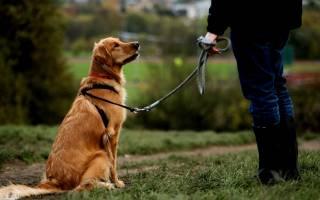 Как научить собаку команде взять