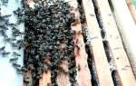 Зимовка пчел: различные способы зимовки
