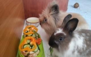 Запор у кролика: симптомы и лечение