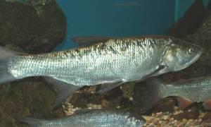 Рыбоводство в России: развитие и перспективы