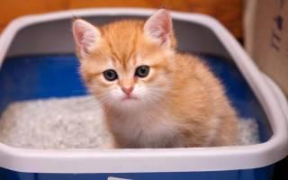 Чем мыть кошачий лоток для удаления запаха