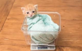 Как выглядит и сколько весит трёхмесячный котёнок