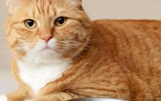 Как отучить кошку от кормов
