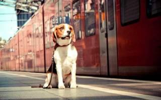 Билет на поезд для собаки