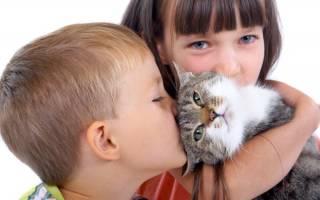 Заразный лишай от кошки к человеку