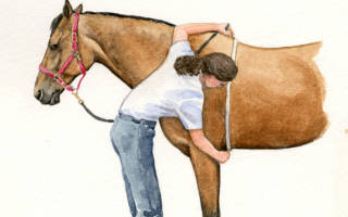 Как определить вес лошади