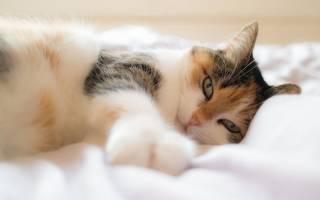 Как дать кошке вазелиновое масло