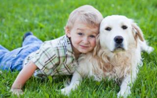 Породы собак-нянек