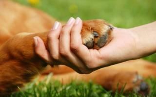 Как подстричь когти щенку, не задев кровеносных сосудов